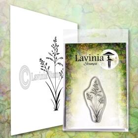 LAV672 - Orchard Grass