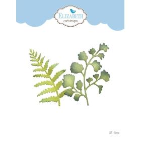 1875 - Ferns